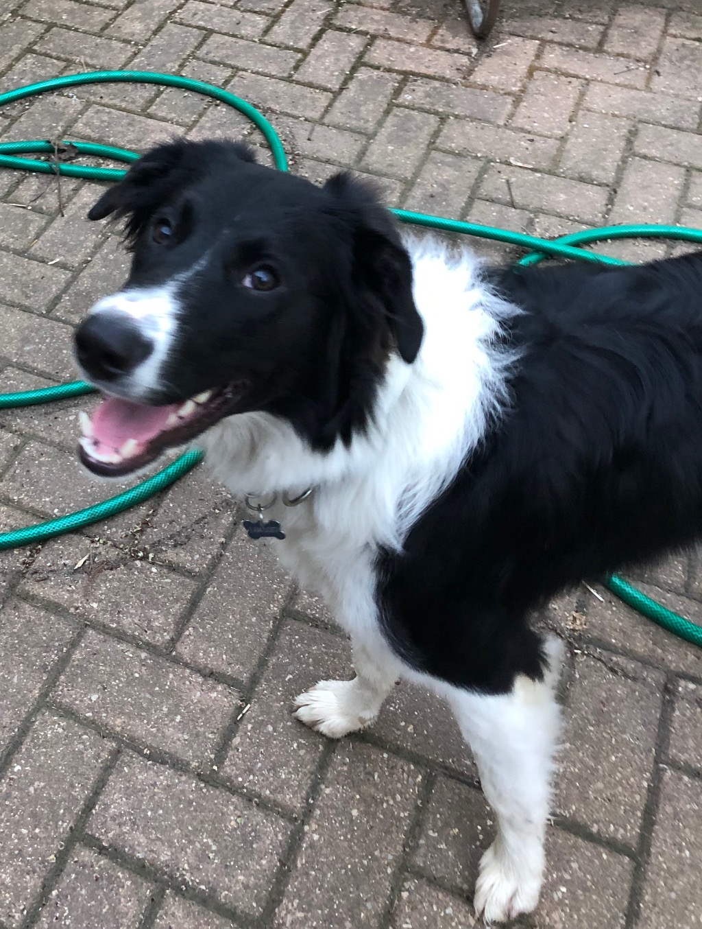 Wisconsin Border Collie Rescue Making A Difference One Dog At A Time
